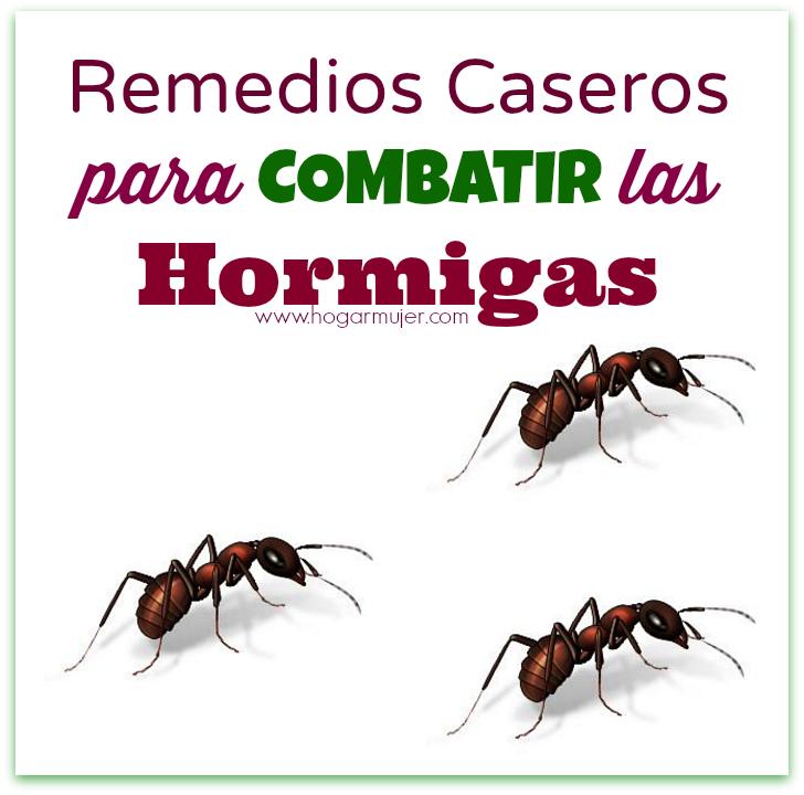 Remedios caseros para combatir las hormigas - Remedios caseros para eliminar hormigas en casa ...